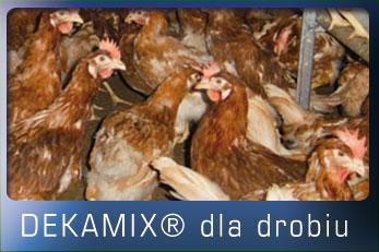 dekamix_drob_home